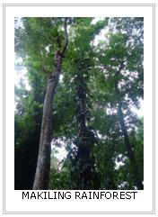 Makiling Rain Forest